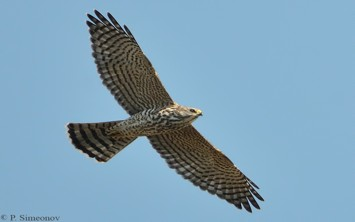 Alaska Seabird Charters - Birding Tours Seward Alaska
