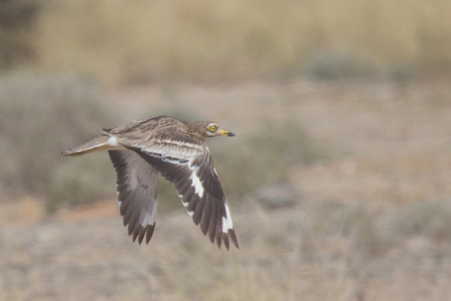 13 thick knee 1024x683