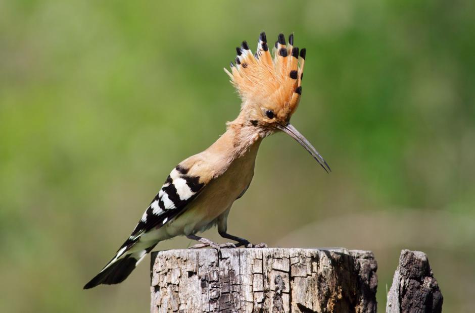 Žena sání velkých ptáků