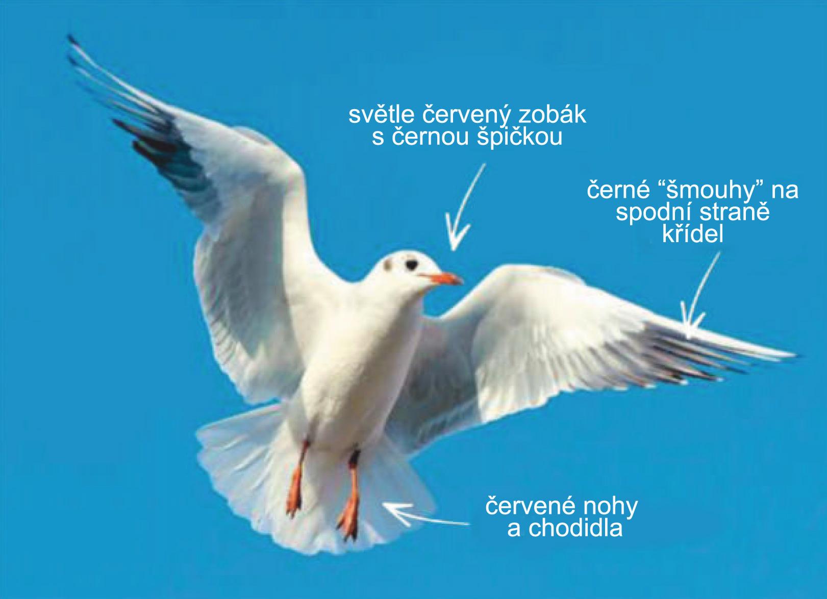 Klín na velkého ptáka