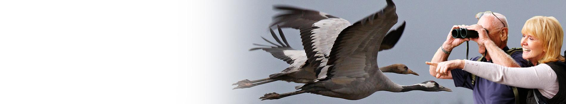 birdwatching_jak-na-ne