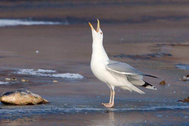 sát velké ptáky