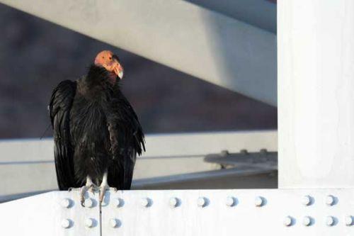 Horké muže s velkými ptáky