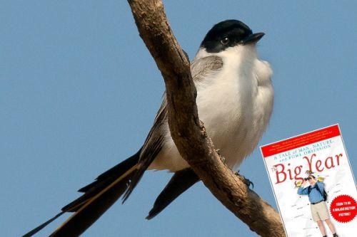 Tvůj pták je příliš velký